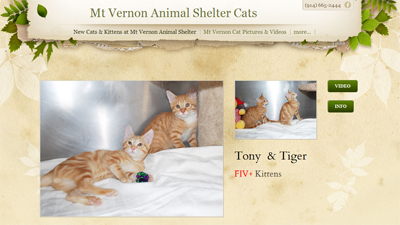 Mt-Vernon-Animal-Shelter-Cats
