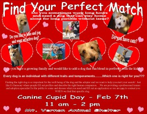 Canine Cupid Day 2015